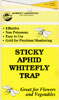Sticky Yellow Traps Catch Flying Whiteflies